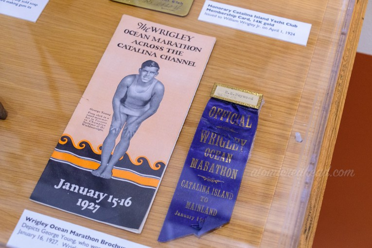 Display case housing a brochure from the Wrigley Ocean Marathon, with an image of a male swimmer on it, and a ribbon for an official.