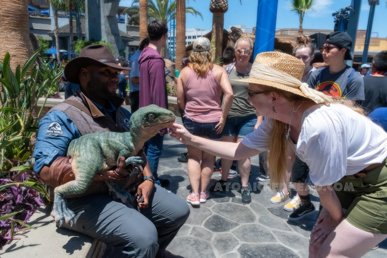 """A """"Jurassic World employee"""" holds a baby raptor of Guests to pet, I kneel down and stroke its chin."""