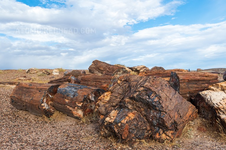 Large chunks of petrified wood scatter a grassy area. The wood is colorful with tans, greys, and reds.