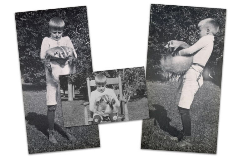 Collage of three black and white images of Roosevelt's son holding a badger.
