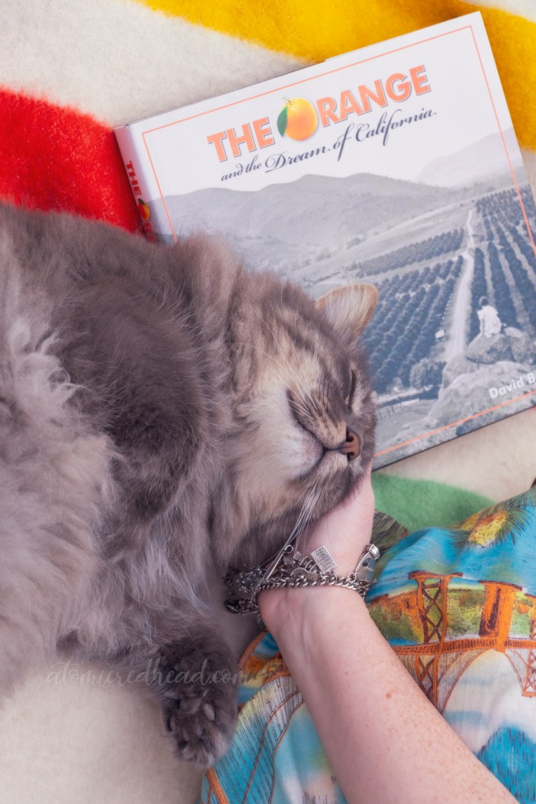 "Close-up of me petting my cat, Colonel Whiskers, with the book ""The Orange and the Dream of California"" in the background."