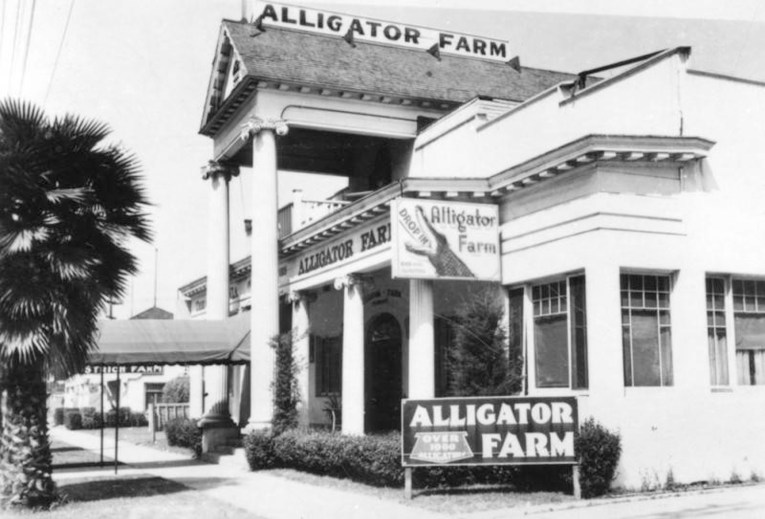 """Exterior view of the Alligator Farm building. Sign in foreground advertises """"Over 1000 alligators."""""""
