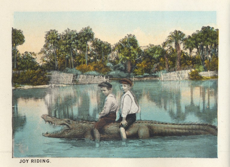 """Two little boys sit atop a gator in a pool. Caption reads """"Joy riding."""""""