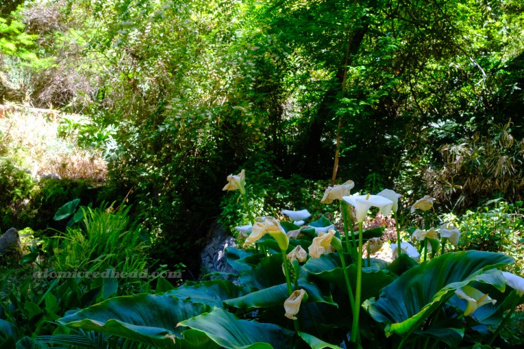 Lilies sprout up from a beautiful green environment.
