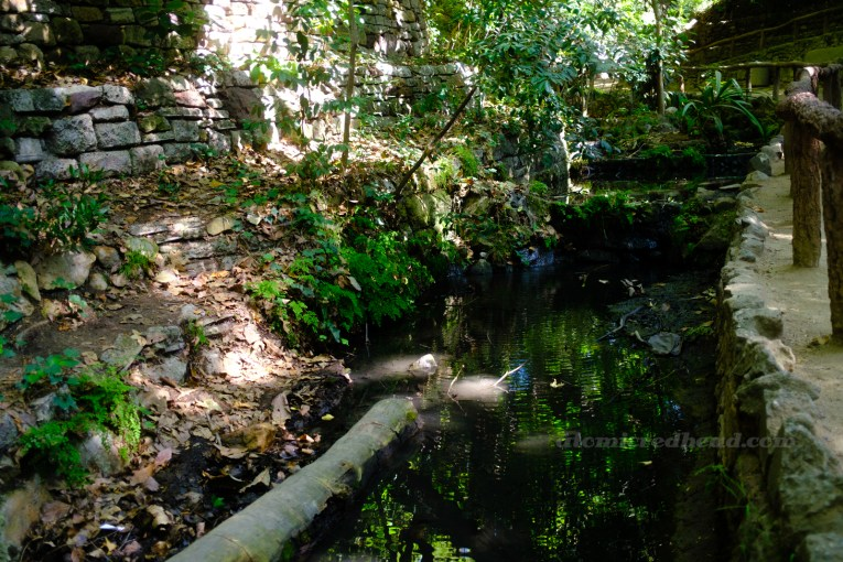 A stream winds through a lush forest filled with a variety of green plants.