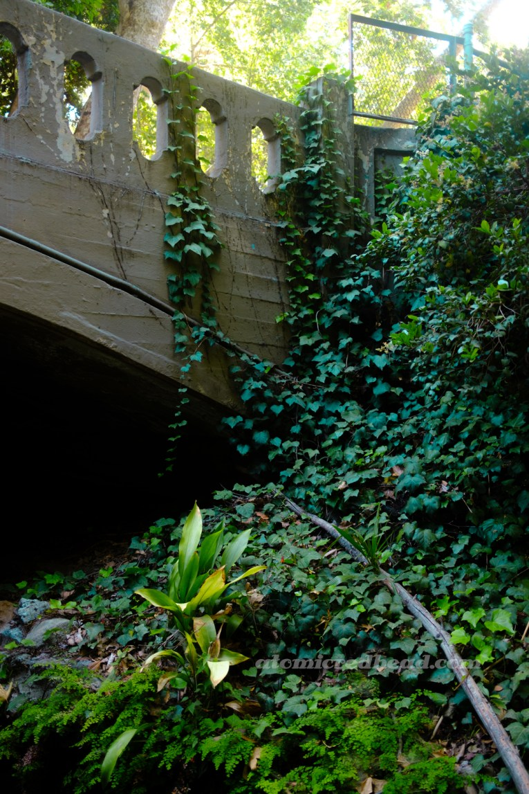 Ivy clings to the side of a concrete bridge.