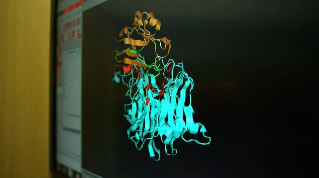 Modeling of MEV-1. The virus is shown in blue. Human protein in gold. The viral attachment protein is in red and its specific receptor on the human protein is in green.