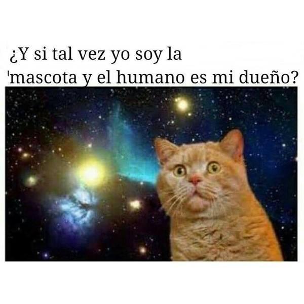 gato filosófico