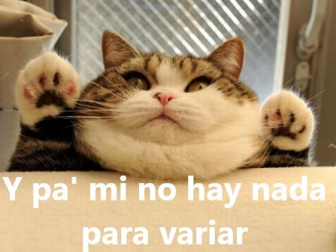 El gato más gordo