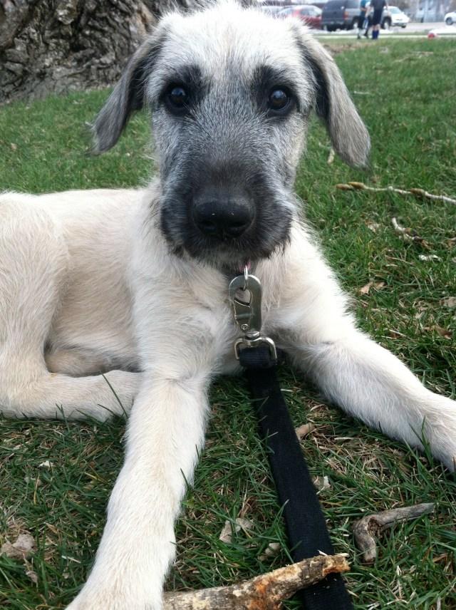 My New Pup!