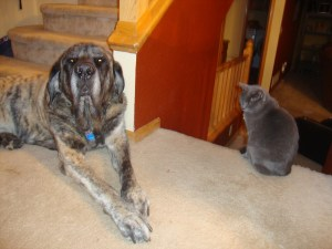 Whoever Said Cats and Dogs Don't Get Along?