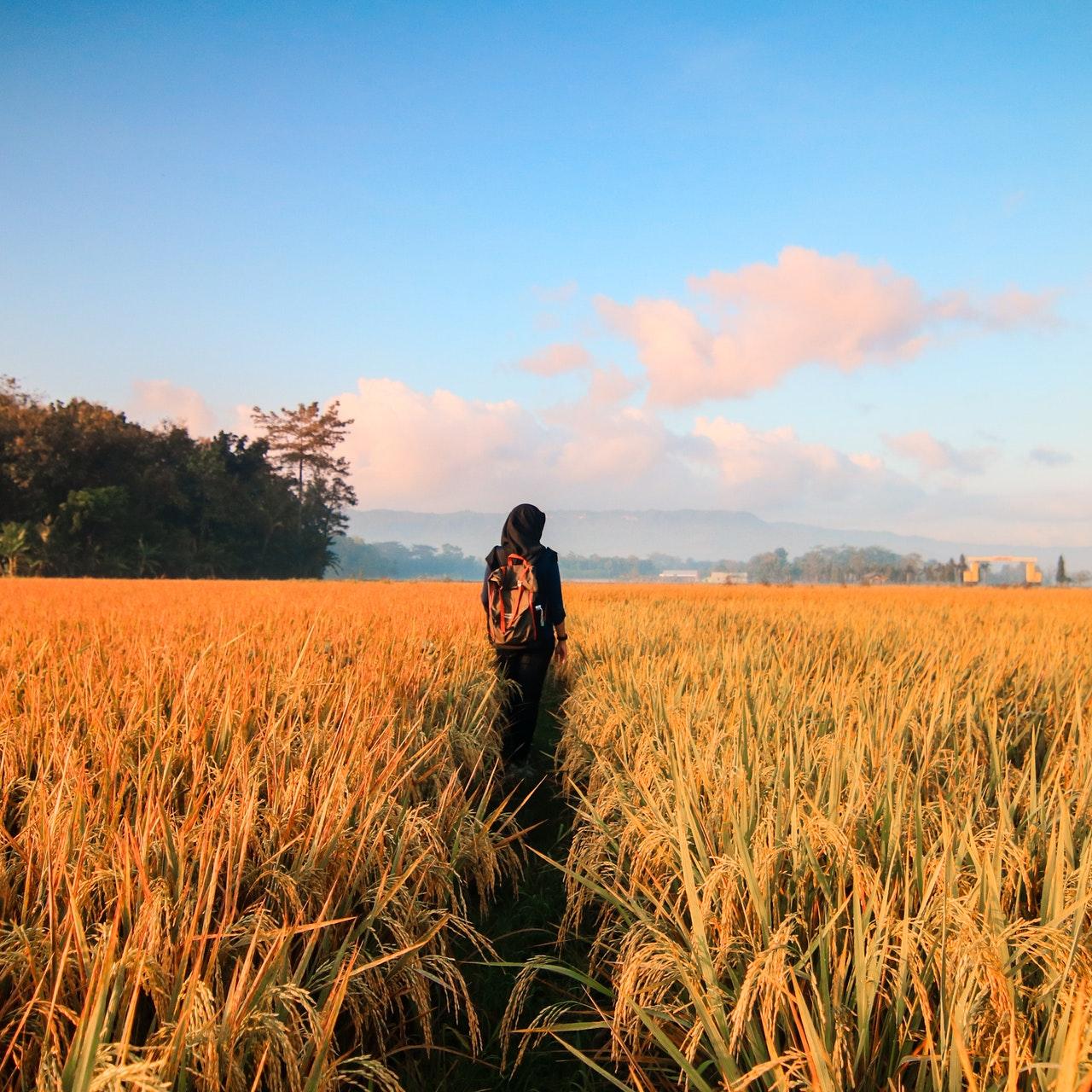 jacob travels to paddan aram for a wife www.atozmomm.com