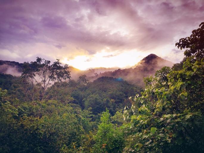 rainforest www.atozmomm.com