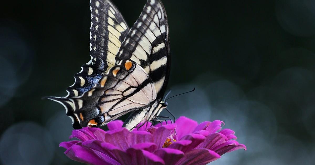 www.atozmomm.com summer bible study online bsf wordg butterflyo study of james