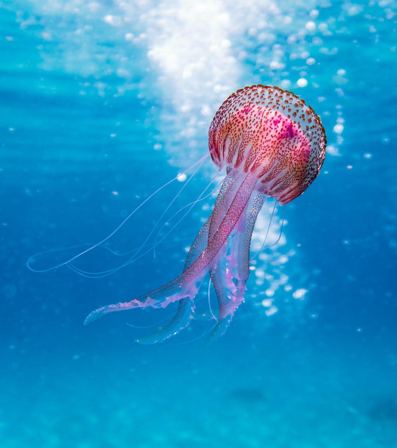 www.atozmomm.com summer bible study online bsf wordgo study of hebrews jellyfish