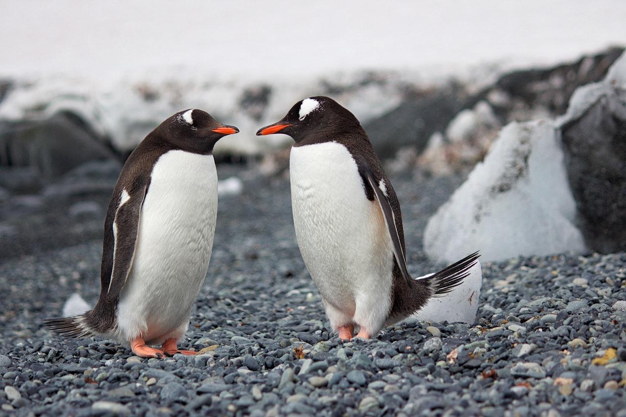 penguins www.atozmomm.com