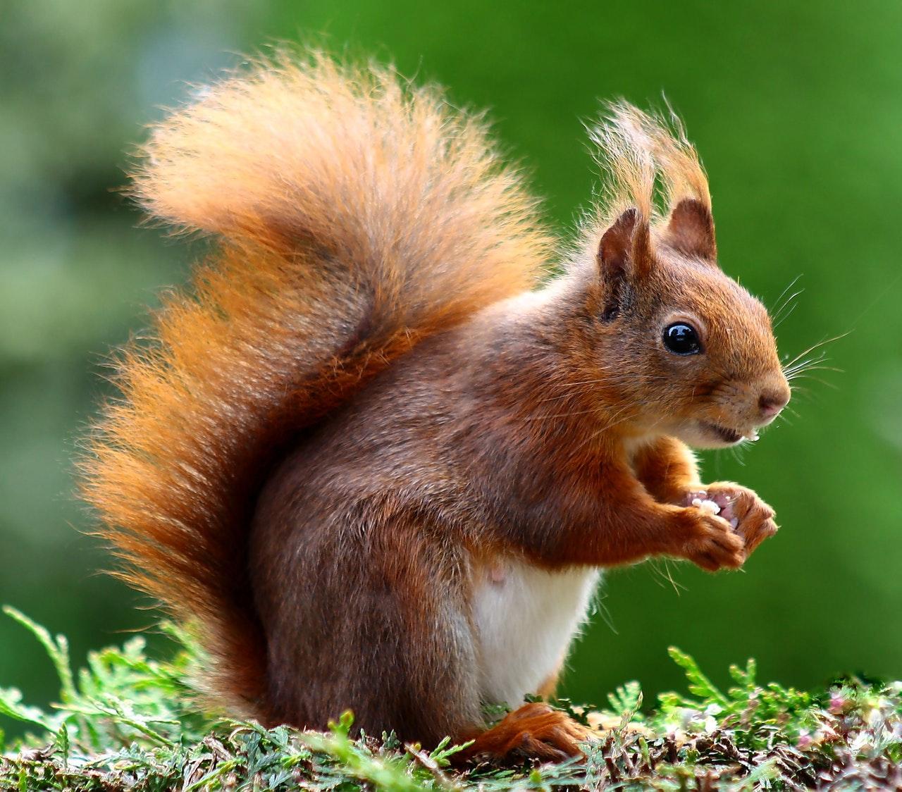 squirrel www.atozmomm.com