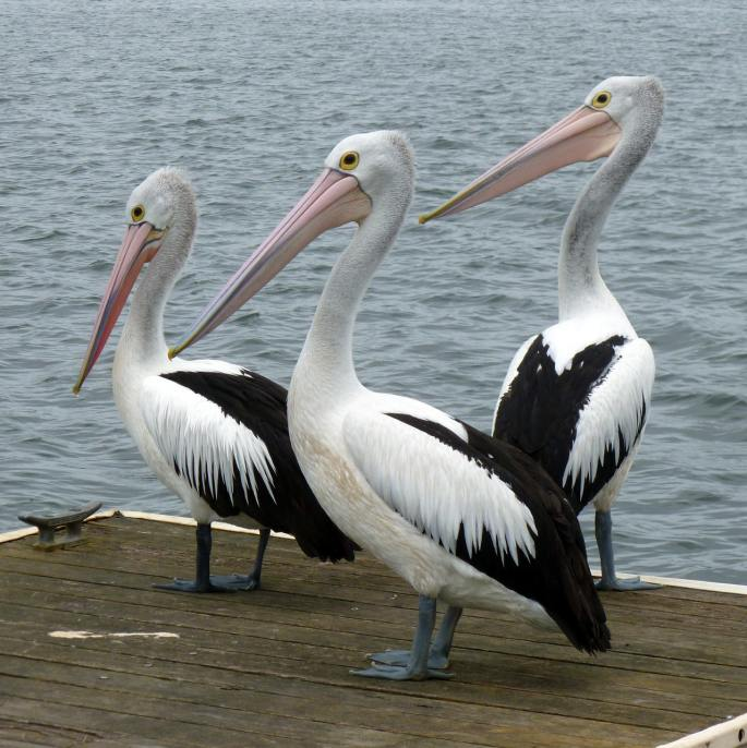 www.atozmomm.com pelicans