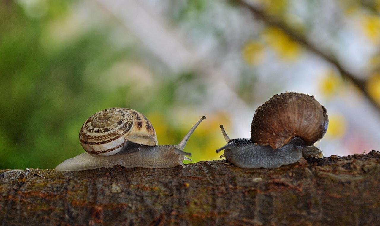 snails www.atozmomm.com