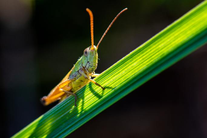 grasshopper www.atozmomm.com