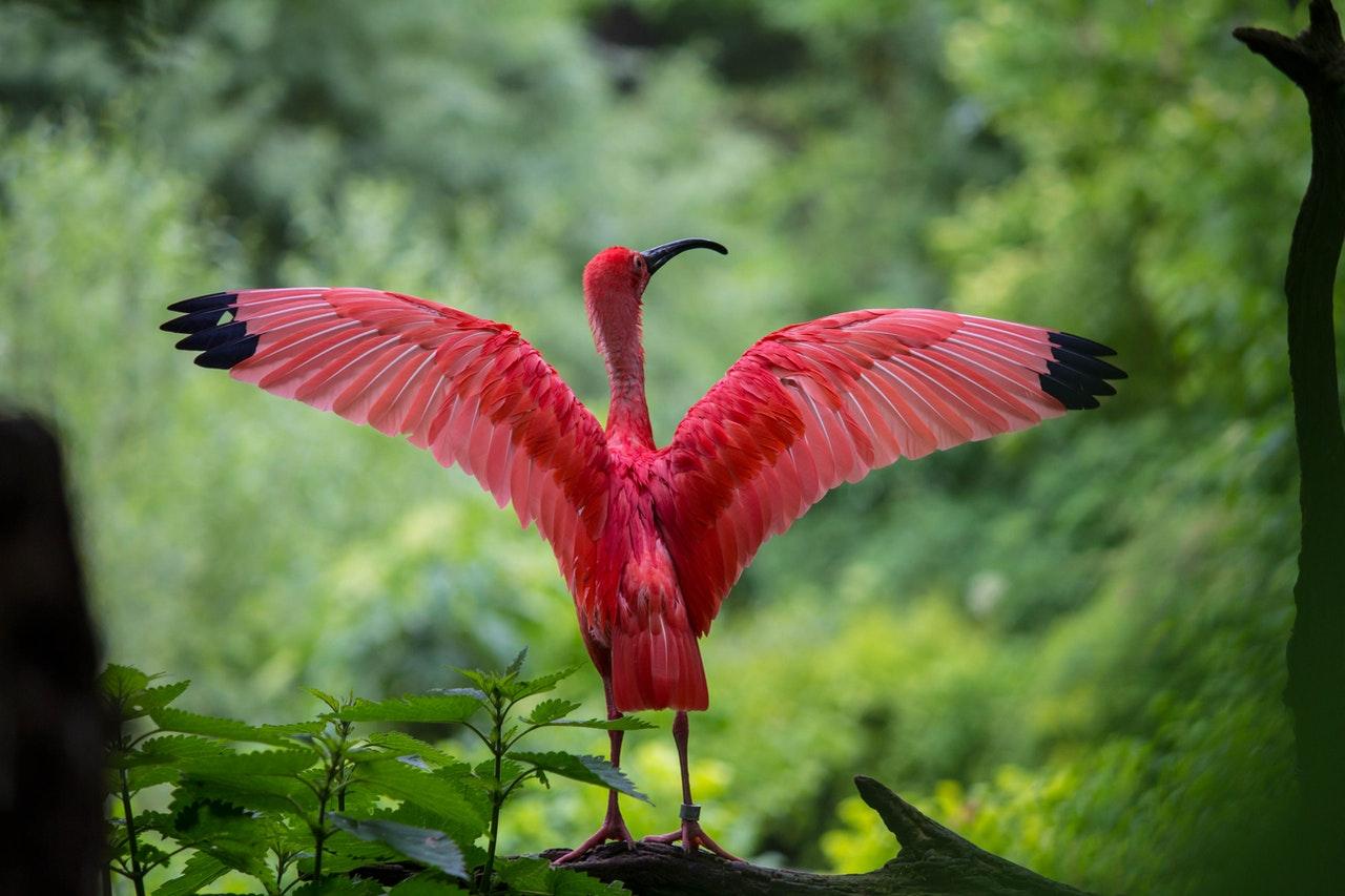 pink flamingo www.atozmomm.com