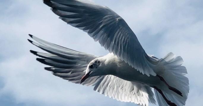 a dove descended upon Jesus when baptized www.atozmomm.com