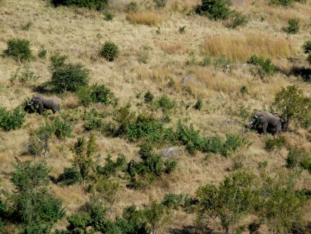Two elephants seen from our lodge on the hill