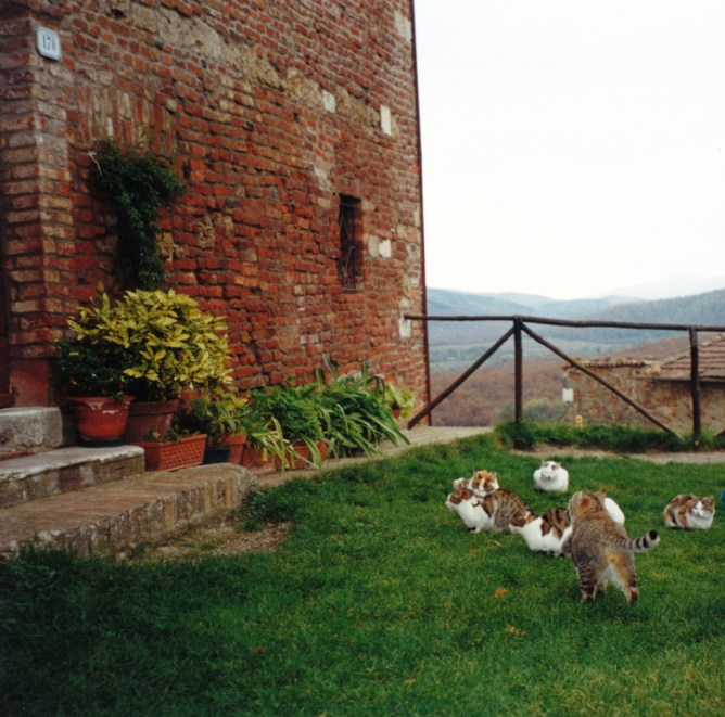The cats outside the abbey attracted our attention.
