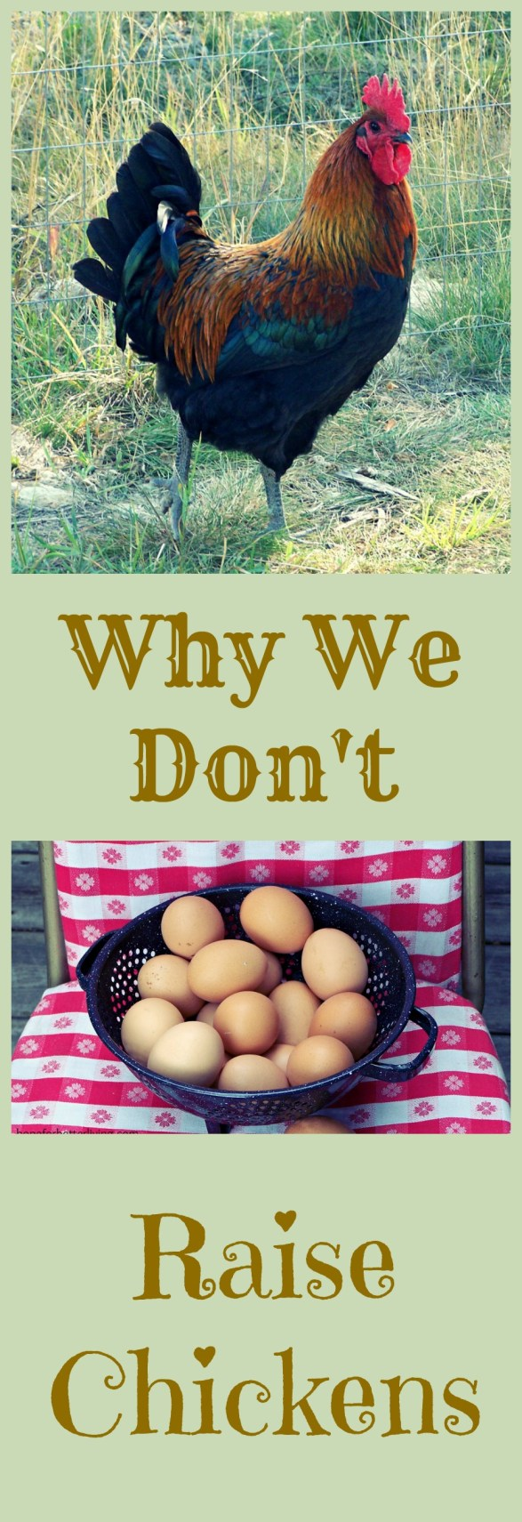 Chickens are the going rage, but here's a few reasons why we prefer OTHER poultry!