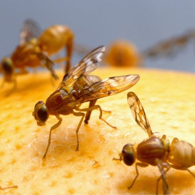 Free Your Home of Fruit Flies: 5 Tips for Success