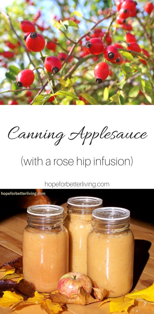 Canning applesauce has never been easier! Learn how to add a boost of natural vitamin C visa rose hips!