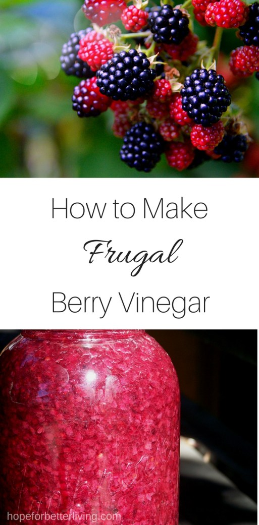 Make frugal berry vinegar this canning season with leftover scraps!