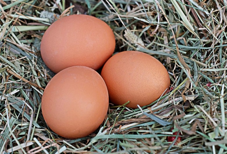 How to Make Sure Your Hatching Eggs Are Fertile