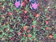 mywalkingShoes
