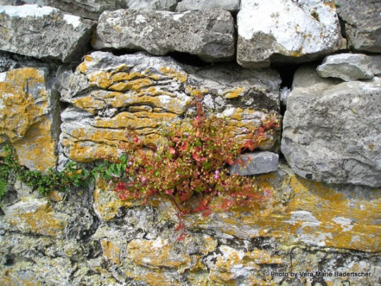 Ireland Rocks and flowers