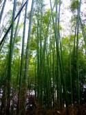 Bamboo trail, Sagano, Japan