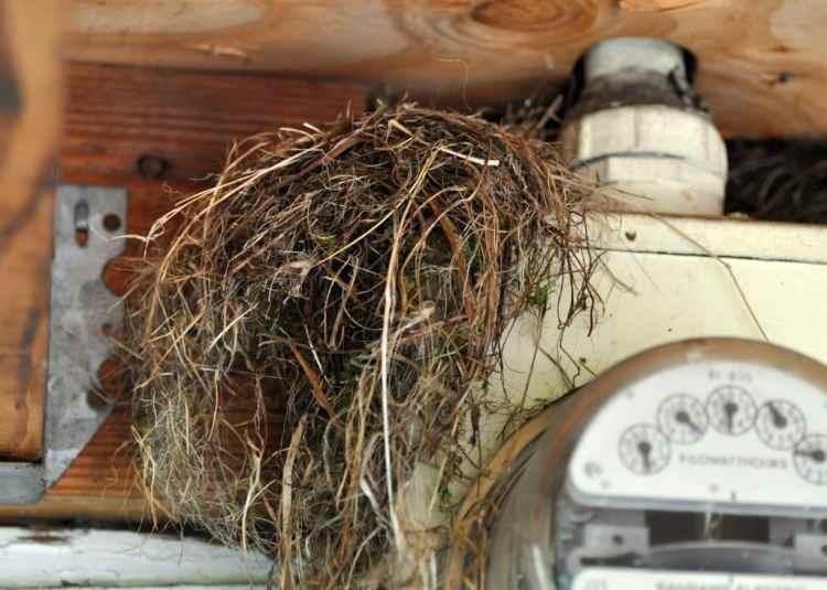 Dark-eyed Junco Nest