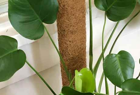 How to: Make a Coir Pole for Monstera