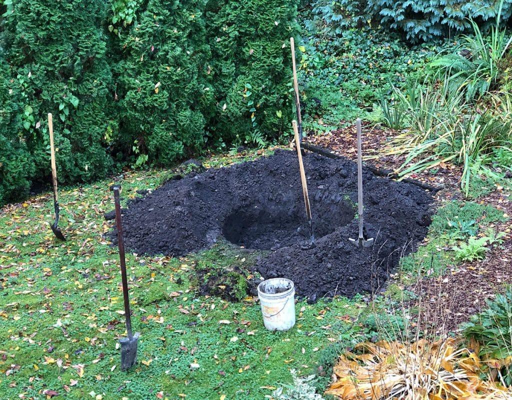 big tree planting hole