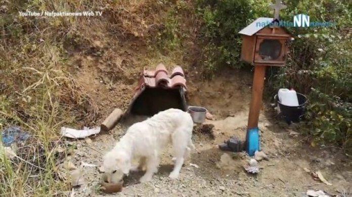 Loyal Dog Story