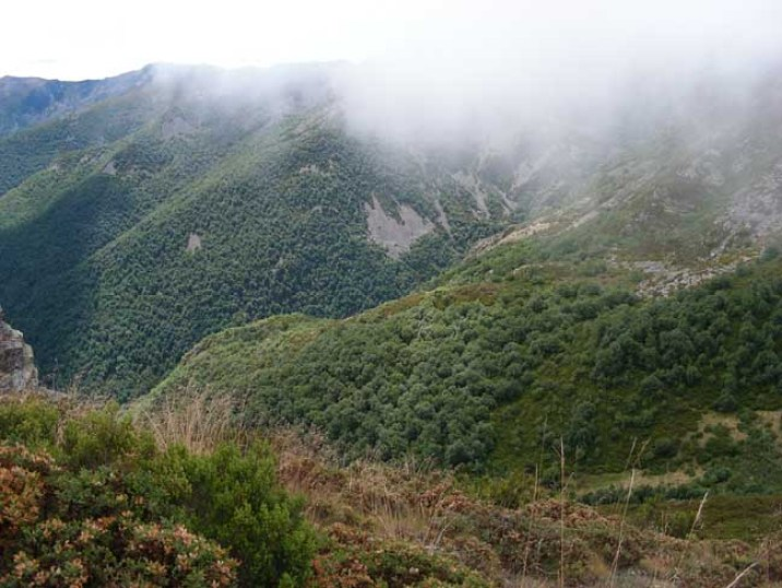 Bosques de los Ancares