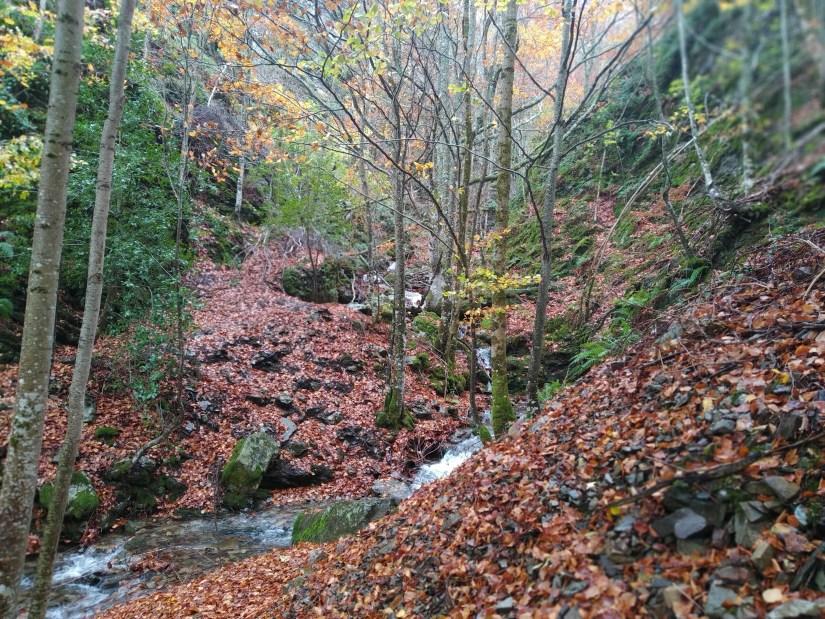 Cascadas llenas de hojas