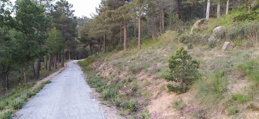 Ruta Circular desde Tablada