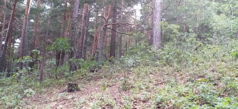 Bosque de Guadarrama