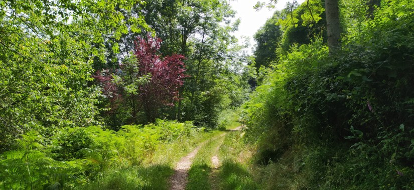 Camino de Herradura