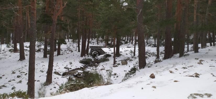 Nevado el bosque