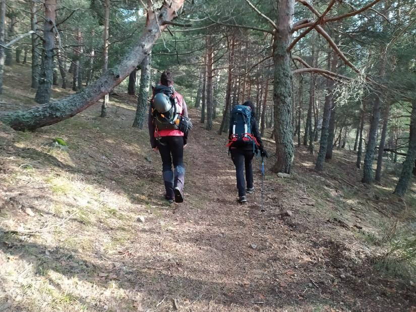 Camino por bosque