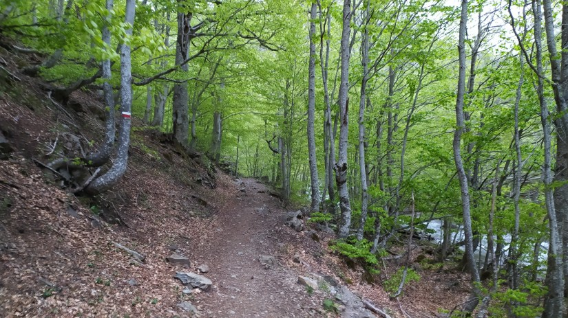 Hayedo de Pirineos