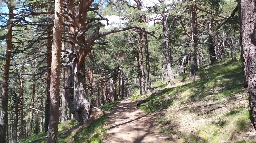 Bosques en la granja de Segovia