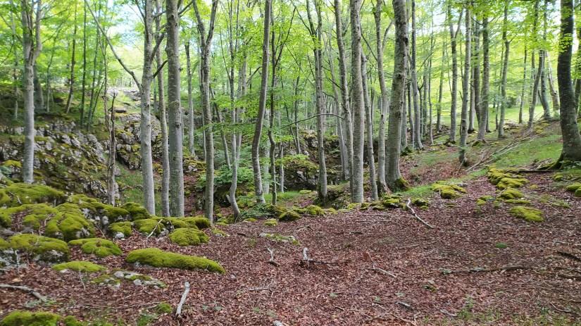 Bosque de hayas y caliza